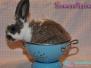 Abgabe - Kaninchen Schneewittchen