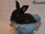 Abgabe - Kaninchen Brummbär