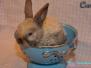Abgabe - Kaninchen Chef