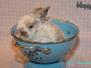 Abgabe - Kaninchen Happy