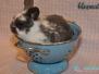 Abgabe - Kaninchen Hatschi