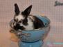 Abgabe - Kaninchen Jäger