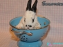 Abgabe - Kaninchen Schlafmütze
