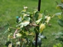 STWEG K37 | Pflanzenbeet